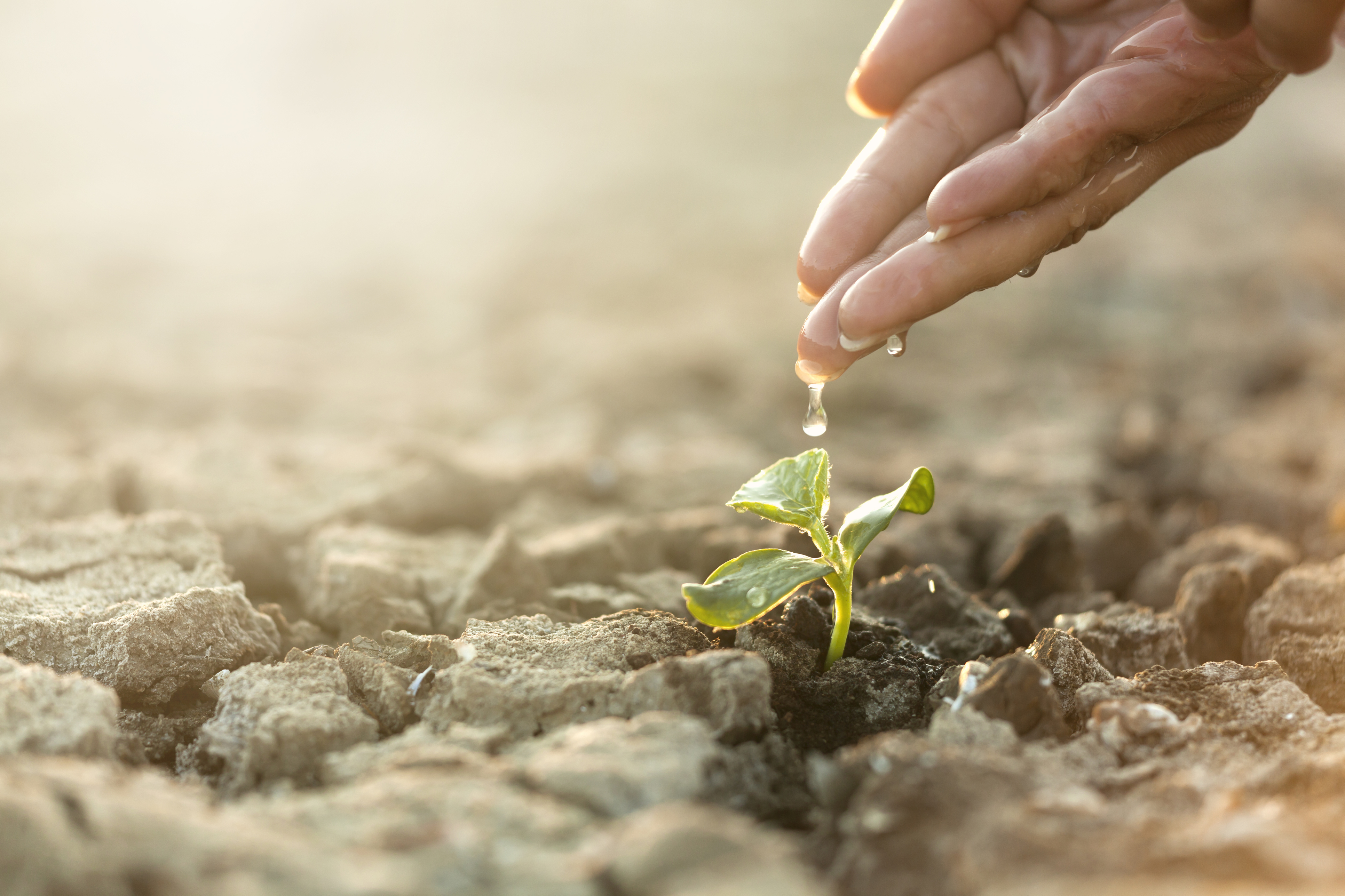 Seeding Plant, woman hand watering young tree on cracked earth soil